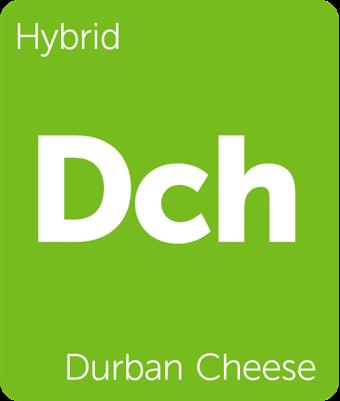 Leafly Durban Cheese hybrid cannabis strain tile