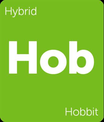 Hobbit cannabis strain Leafly