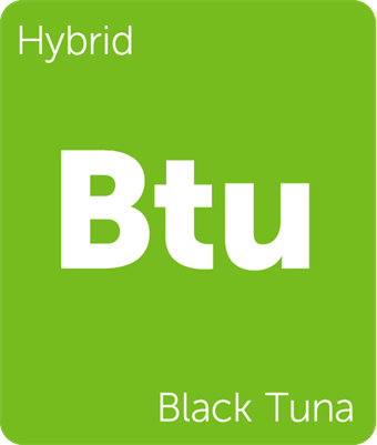 Leafly Black Tuna cannabis strain tile