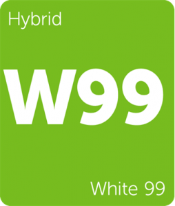 Leafly White 99 cannabis hybrid strain