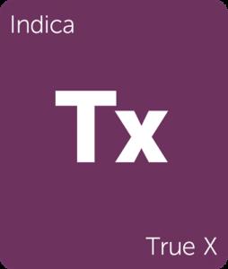 Leafly True X indica cannabis strain
