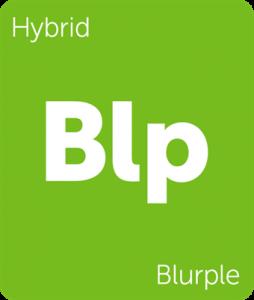 Leafly Blurple hybrid cannabis strain