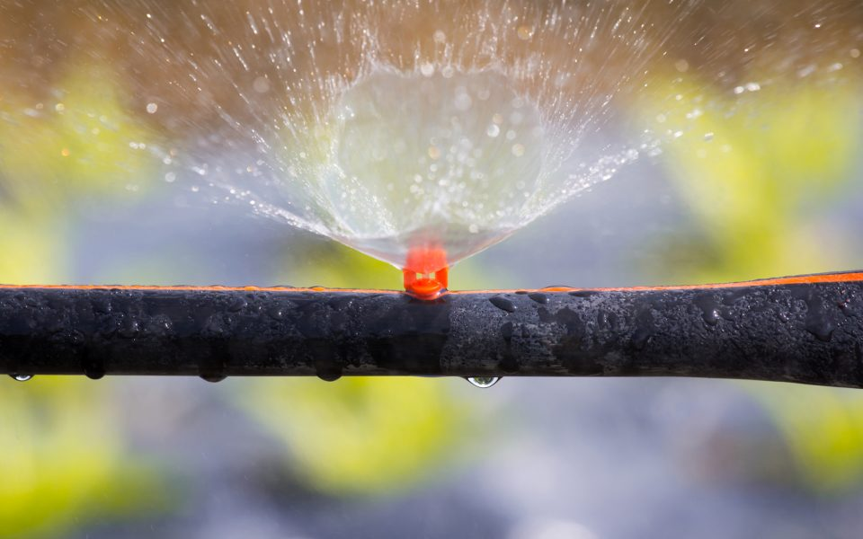 Closeup sprinkler watering the vegetable in an hydroponics system
