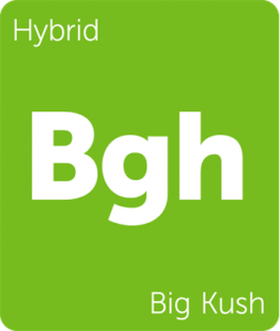 Leafly Big Kush hybrid cannabis strain tile