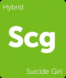 Leafly Suicide Girl hybrid cannabis strain tile