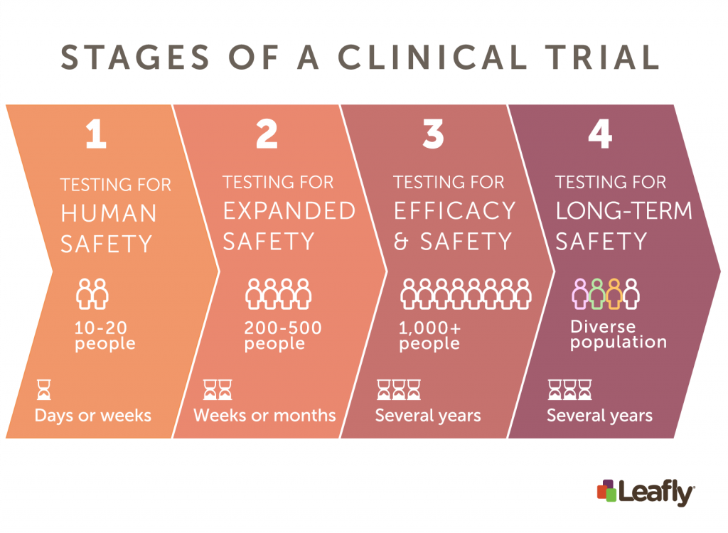 cannabis and epilepsy clinical trial stages