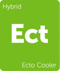 Leafly Ecto Cooler cannabis strain tile