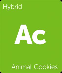 Leafly Animal Cookies hybrid cannabis strain