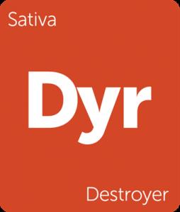 Leafly Destroyer sativa cannabis strain