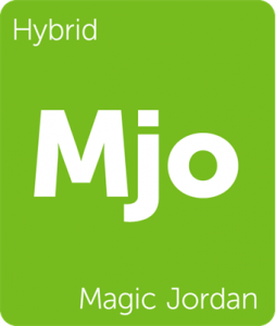 Leafly Magic Jordan hybrid cannabis strains