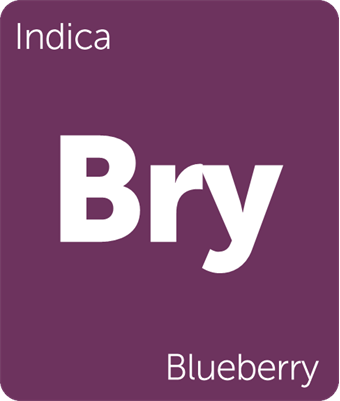 Leafly Blueberry indica cannabis strain