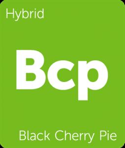 Leafly Black Cherry Pie hybrid cannabis strain
