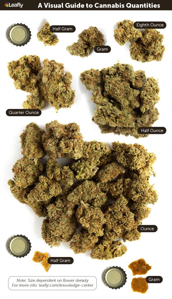 EU62VjFTWapZnZuj1HOl_A Visual Guide to Cannabis Quantities