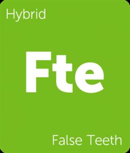 Fte False Teeth Leafly cannabis strain tile