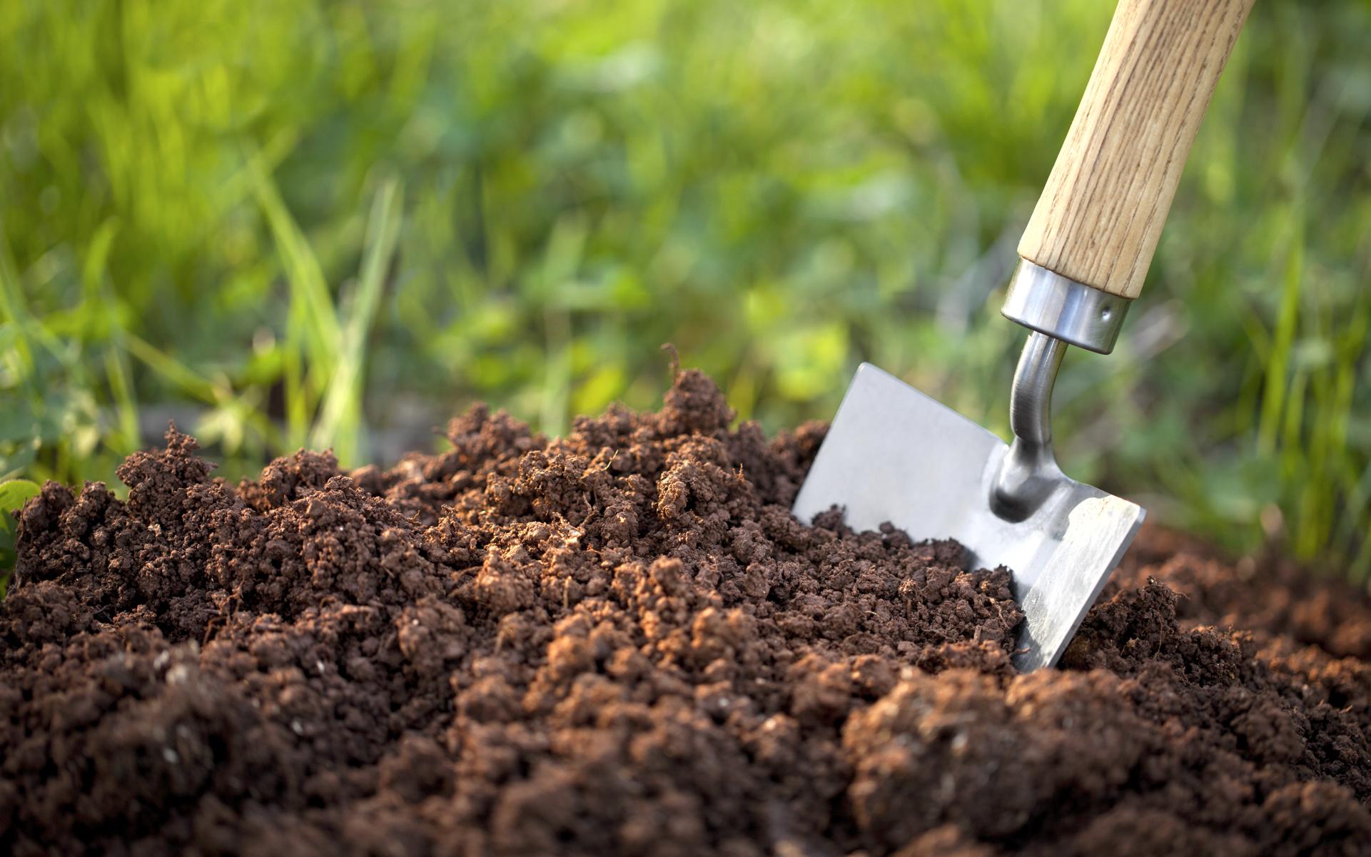 soil is best growing media for plants