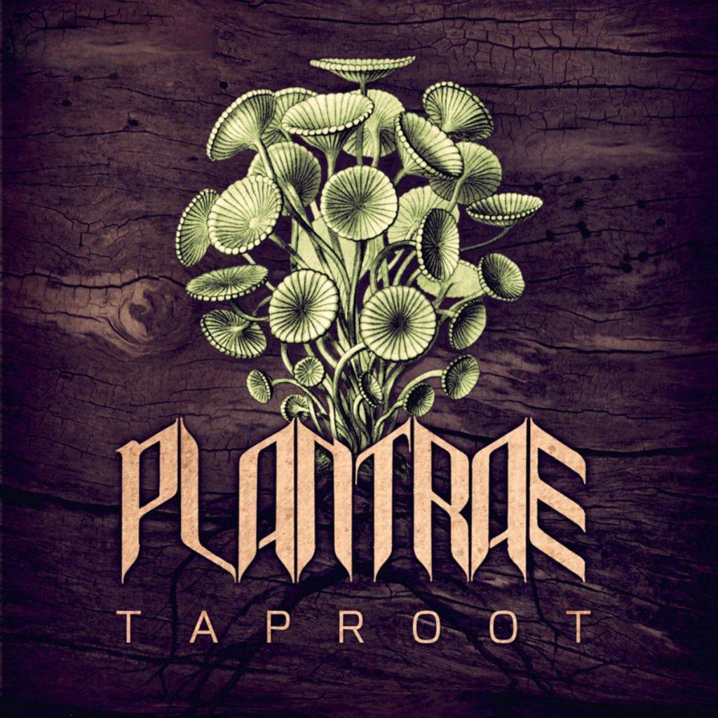 plantrae-taproot-web