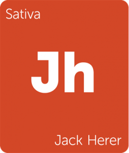 Leafly Jack Herer sativa cannabis strain