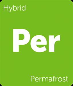Leafly Permafrost hybrid cannabis strain