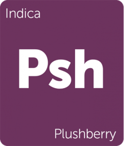 Leafly Plushberry indica cannabis strain