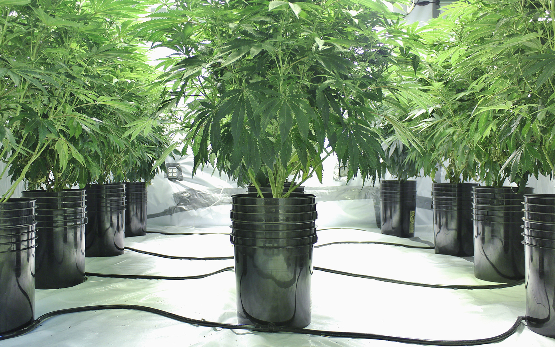 photo of How to choose the right container for your cannabis plant image