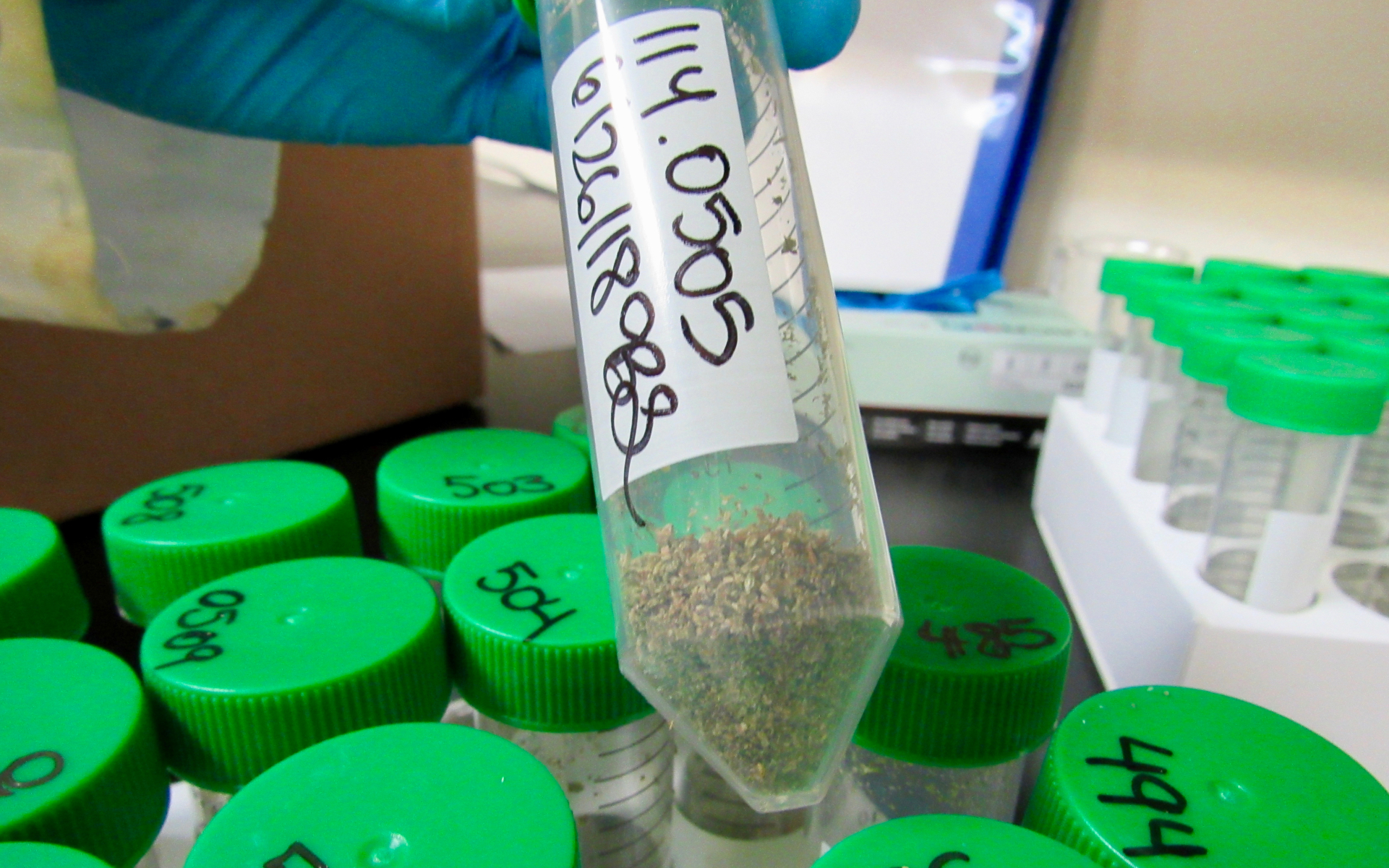 A ground cannabis sample is prepared for analysis at EVIO Labs in Berkeley, Calif. (Photo David Downs | Leafly)