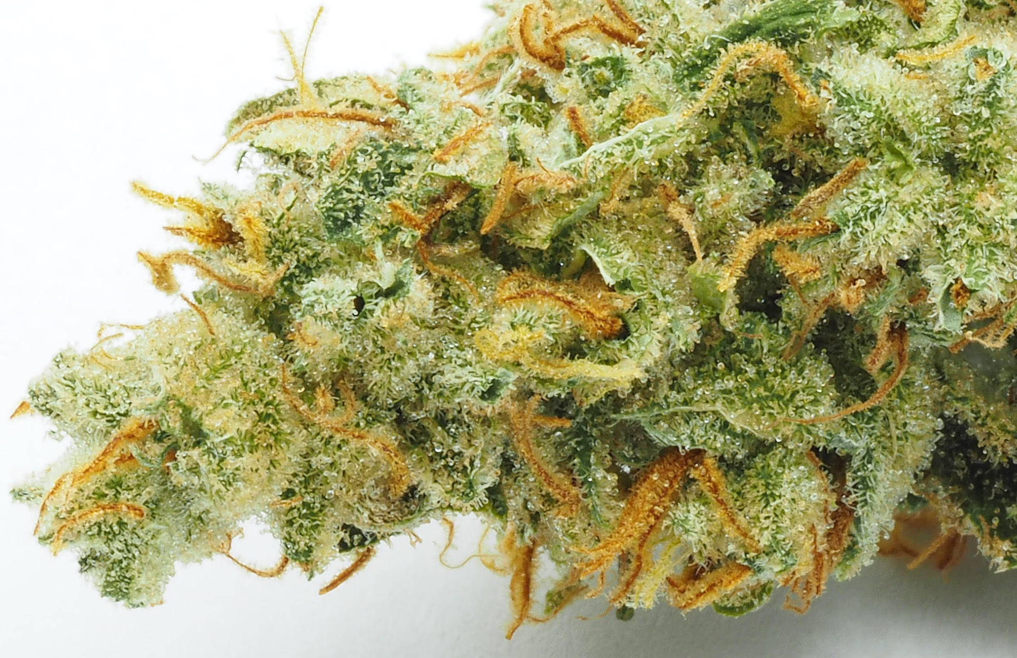 CRAFT Super Lemon Haze comes straight from the source in Amsterdam. (Courtesy CRAFT/SC Labs)