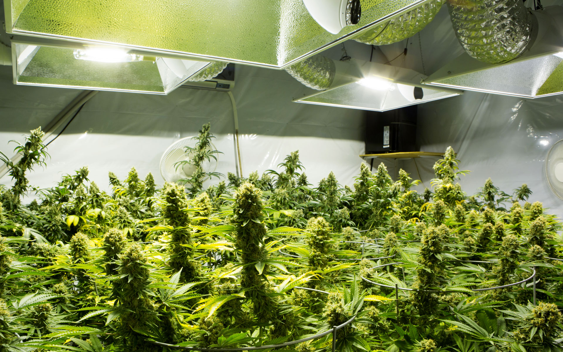 What Equipment do You Need When Growing for Indoor Cannabis Growing?