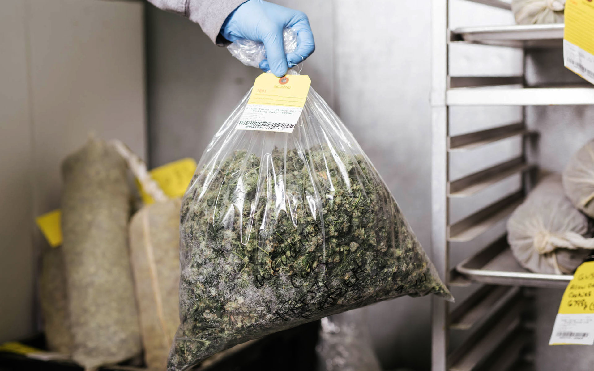 extraction, cannabis concentrate, marijuana concentrate