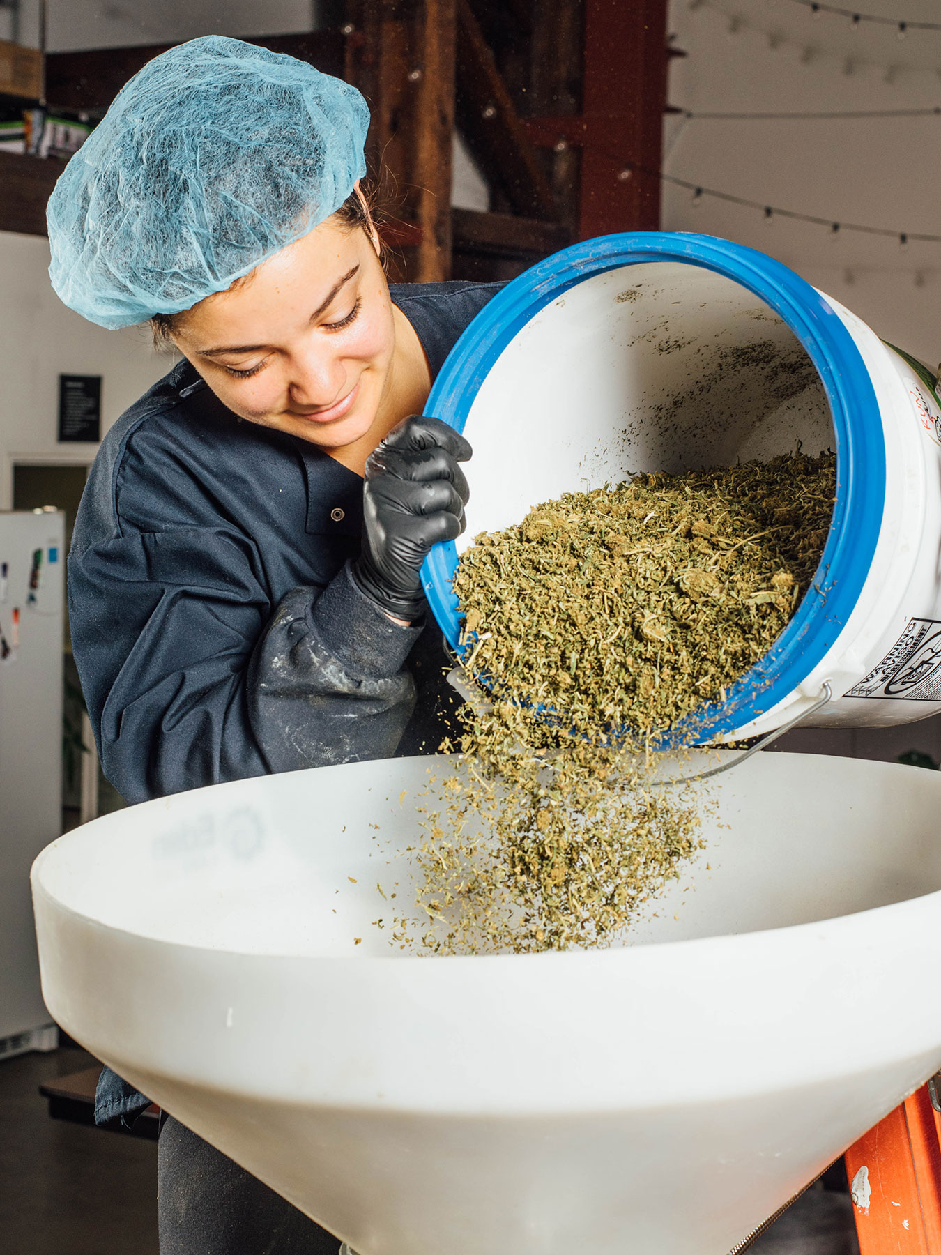 starting material, extraction, cannabis concentrate, marijuana concentrate