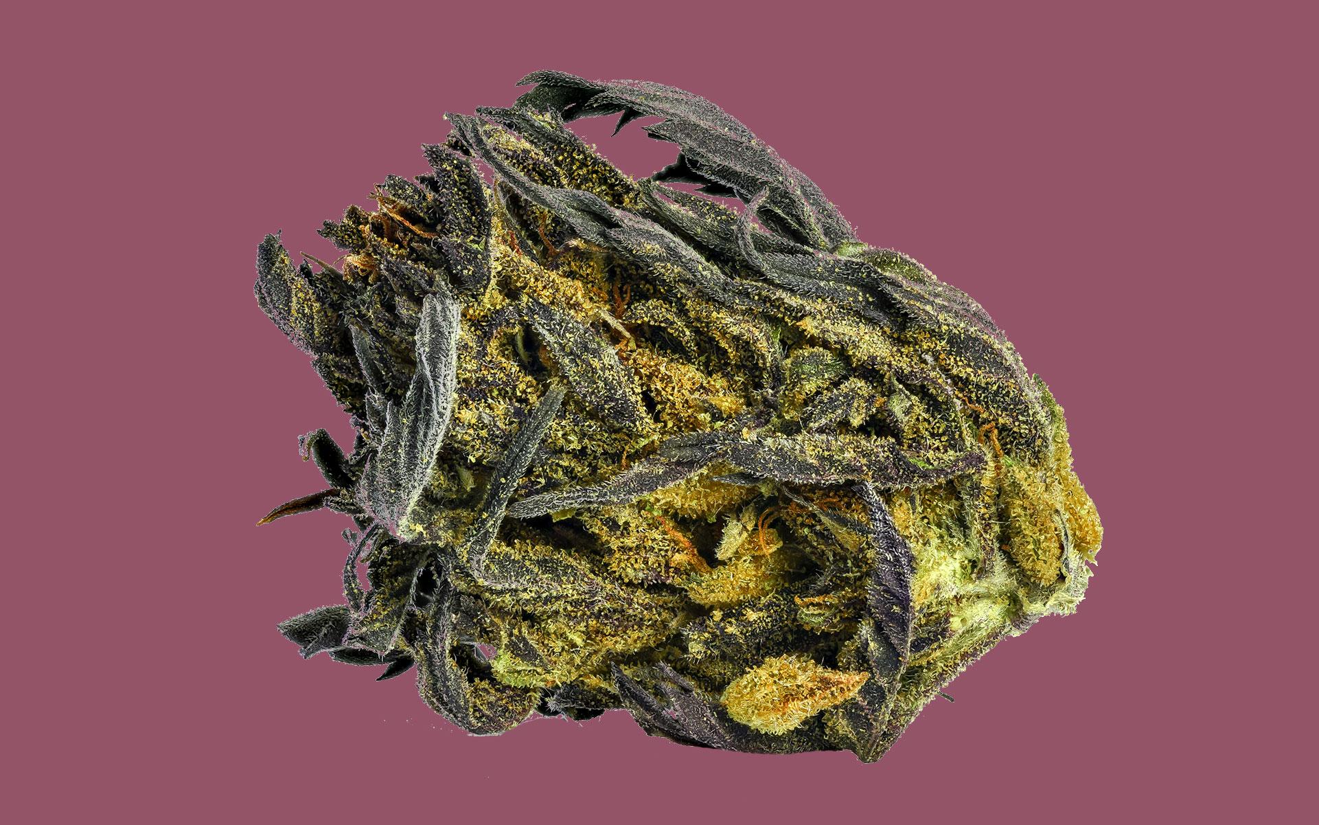 Hemp & CBD Uses, Benefits & Impact ...coloradocannabistours.com