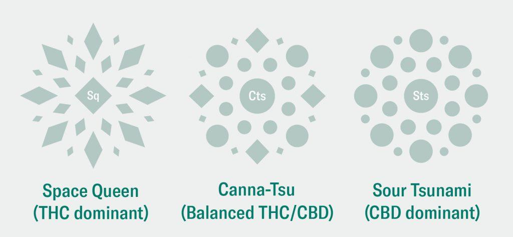 thc dominant vs balanced thc cbd vs cbd dominant