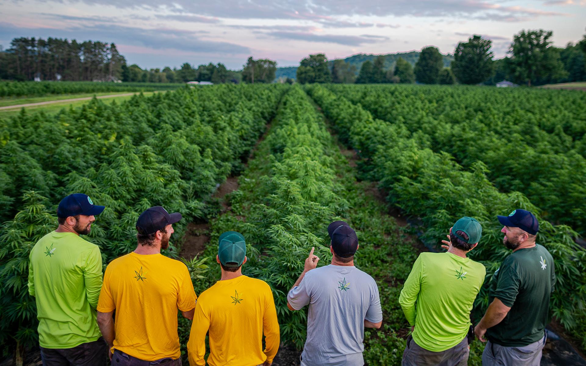 USDA CERTIFIED ORGANIC HIGH cbd and CBG HEMP, organic hemp farm, vermont hemp,
