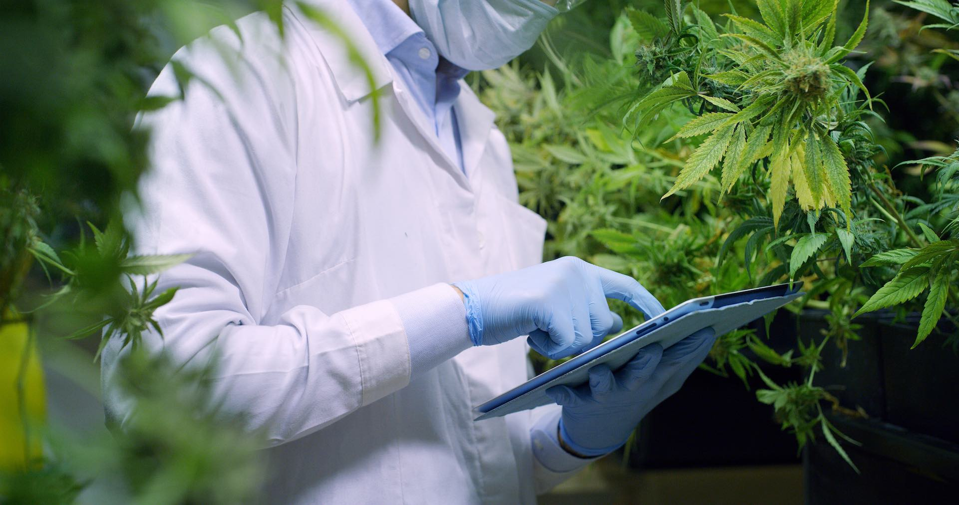 photo of Cannabis pioneer launches company to unlock the potentials of the endocannabinoid system image