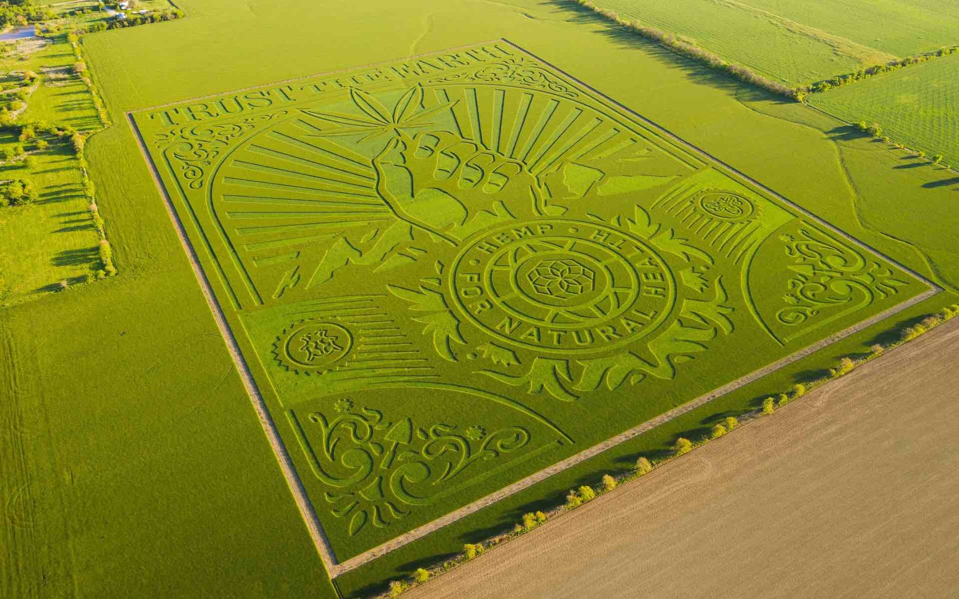 TrustTheEarth FarmFieldArt  sized weighed to BB - Shepard Fairey's 76-acre cannabis crop art will blow your mind