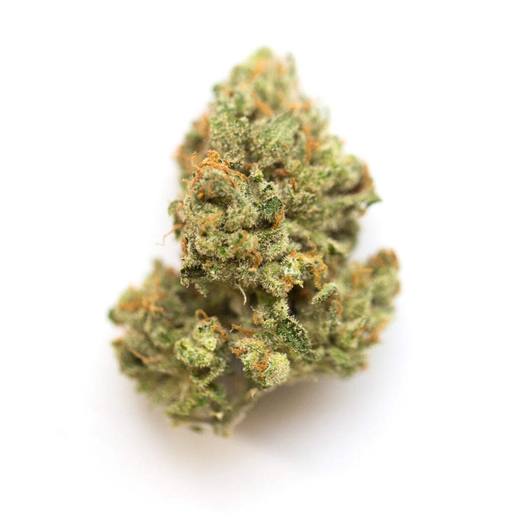 jack herer 1024x1024 - Strains to support parents through back-to-school season