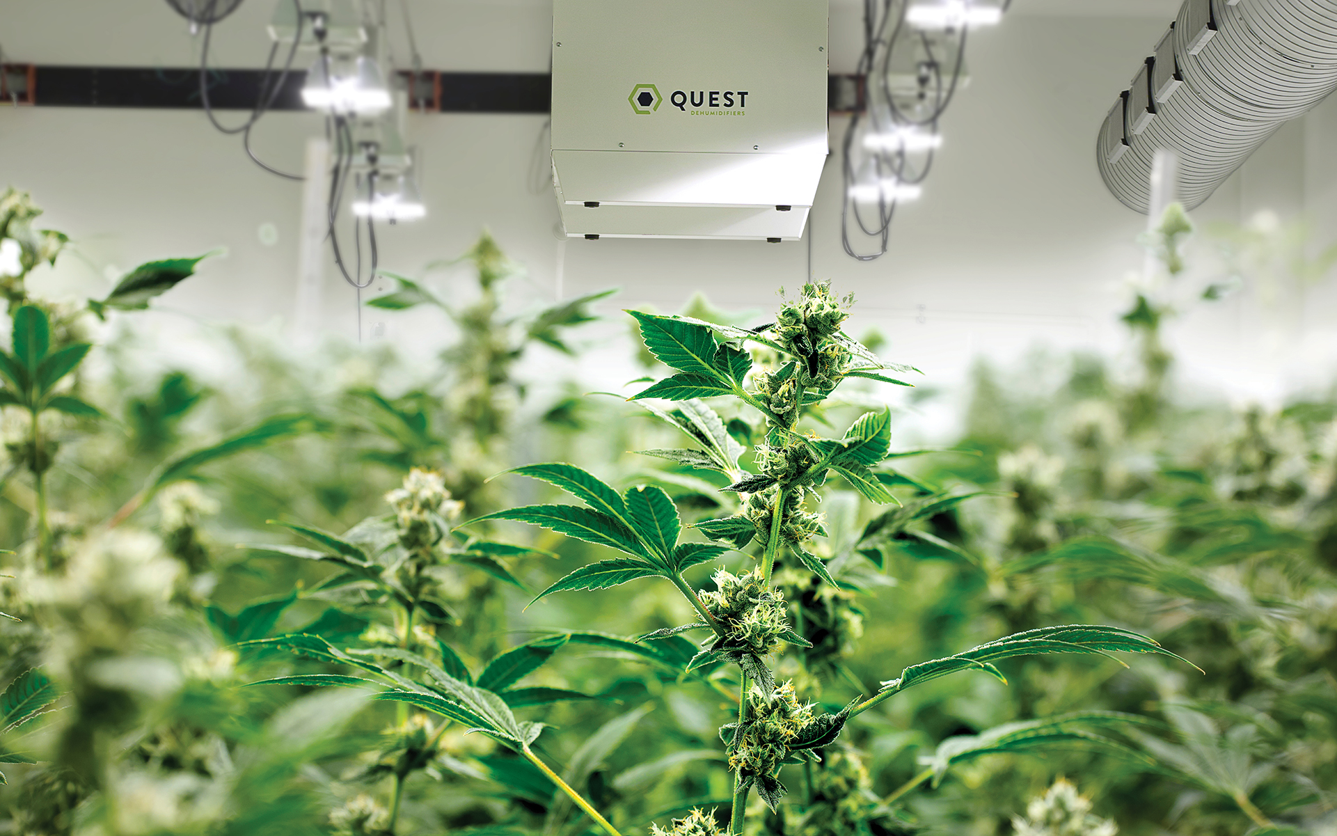 Is a tailor-made HVAC system the key to creating ideal cannabis growing conditions?