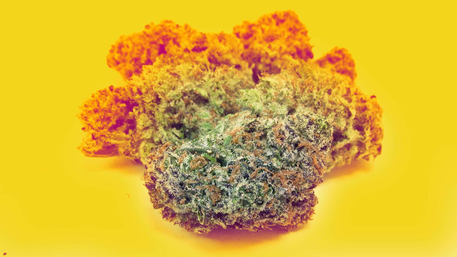 Arizona's 6 leading legal weed farms