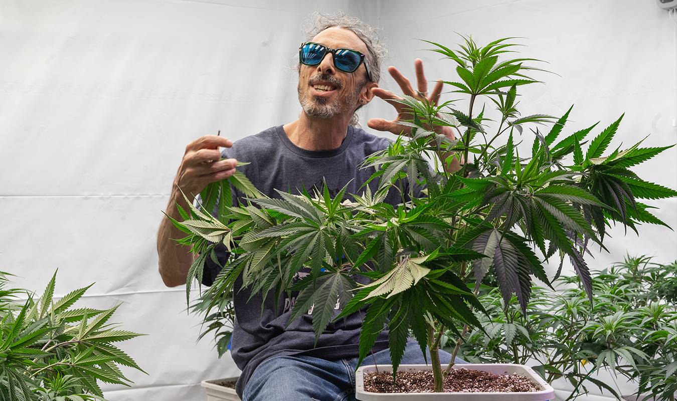 New York will soon allow homegrown medical cannabis